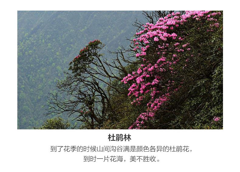雪山徒步详情_11.jpg